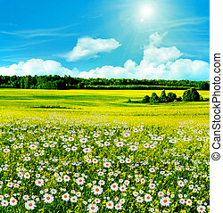 blossom camomile field on a background of blue sky with clouds
