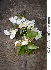 blossom cherry branch on wooden plank
