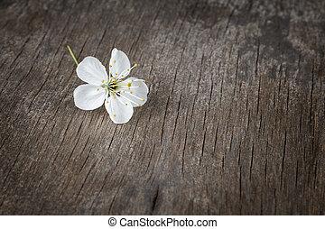 blossom cherry flower on wooden plank