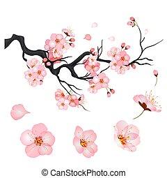 Blossom cherry flowers on branch of Japanese sakura tree. Vector