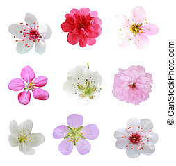 Set of fruit blossom isolated on white background