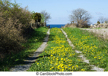 Blossom country road - Landscape with blossom dandelions at...