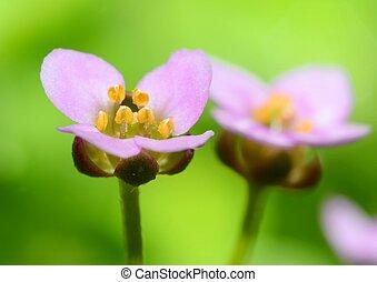 Blossom extreme macro