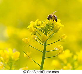 Blossom flowers with bee