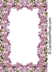 Blossom Frame - apple blossoms isolated on a white...