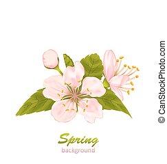 blossom , kers, bladeren, vrijstaand, achtergrond, witte