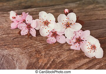 blossom , kers, sakura, houten, rustiek