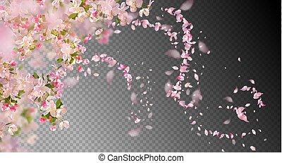 blossom , lente, kers