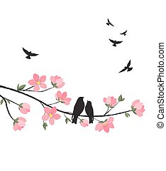 blossom , lente, sakura