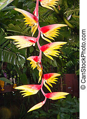 blossom of a banana tree in a botanical garden