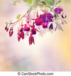 Red and Purple Fuchsia Flowers