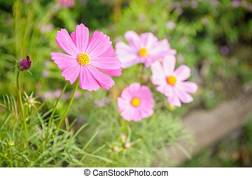 Blossom pink flower in garden.