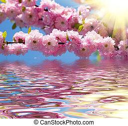 Blossom pink sakura flowers in springtime