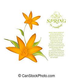 blossom., vrijstaand, kaart, krokus