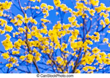Blossomed araguaney under blue sky, intentional blur