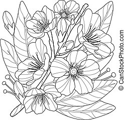 Blossoming almond tree branch with flowers. Vector black and...