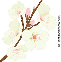 Blossoming almond tree branch with flowers. Vector illustration