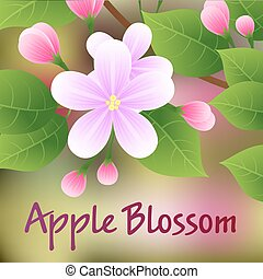 Blossoming apple tree branch with pink flowers. Vector