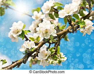 blossoming apple tree over blue sunny sky