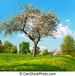 blossoming apple tree over cloudy blue sky