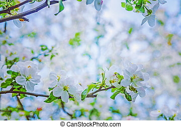 blossoming apple tree view on branch with blurred background ins