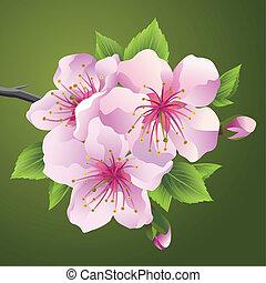 Blossoming branch of japanese tree sakura
