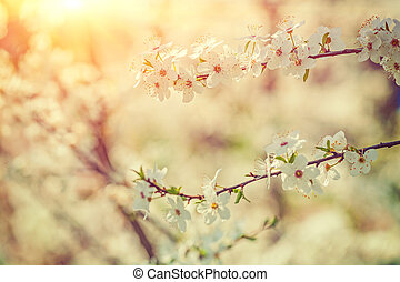 blossoming branches of cherry on blurred background