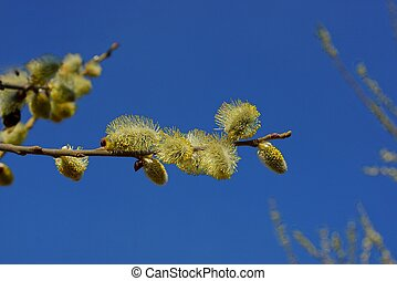 blossoming buds on a tree branch against the sky