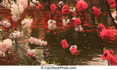 Blossoming Cherry Pond Goldfish