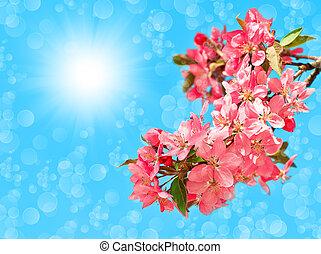 blossoming cherry tree over blue sunny sky