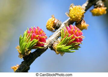 Blossoming close-up
