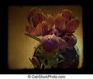 a time lapse bloosoming crocus stylized as old movie