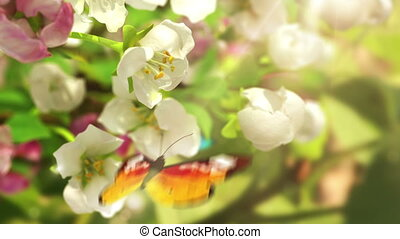 Blossoming flowers and butterflies