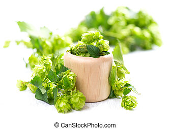 Blossoming hop in wooden bowl over white background. Beautiful green whole hops with leaves close up isolated on white table. Beer ingredients. Brewery concept. Alternative medicine