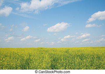 Blossoming landscape