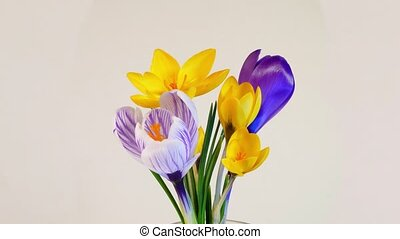 Blossoming of flowers - Isolated flowers blooming timelapse...