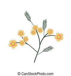 Blossoming of Orange Yarrow or Achillea Millefolium Flowers...