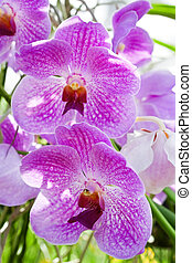 Blossoming orchids in a spring garden
