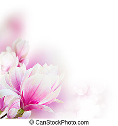 Blossoming pink magnolia tree Flowers - Blossoming pink ...