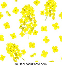 Blossoming Rapeseed seamless pattern isolated. Canola or ...