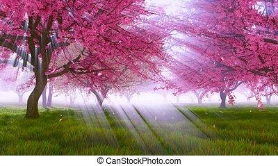 Blossoming sakura cherry trees in sunlight Slow-mo -...