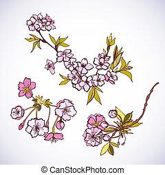 Blossoming sakura decorative elements