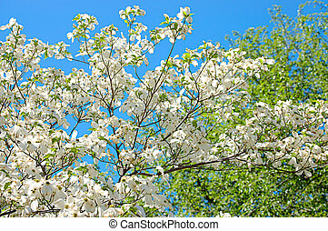 Blossoming tree against the blue sky