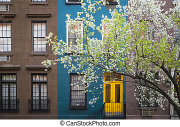 Blossoming tree, apartment building, Manhattan, New York ...
