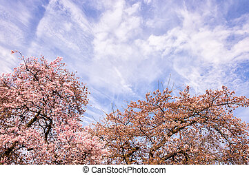 Blossoming tree branch in springtime