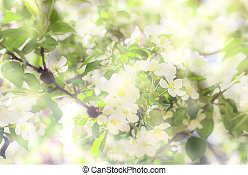 blossoming tree brunch with white flowers