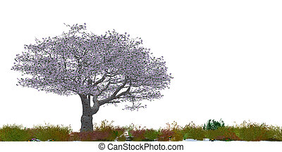 Blossoming tree of a cherry