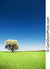 Blossoming tree on a turning green meadow