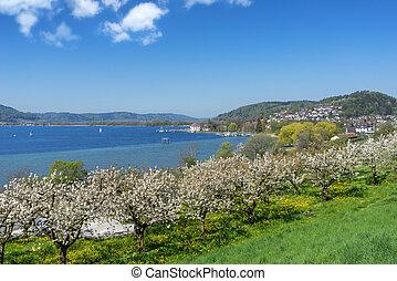 Blossoming trees at Lake Constance