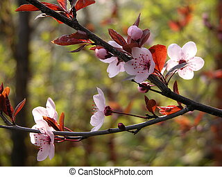 Blossoming twig